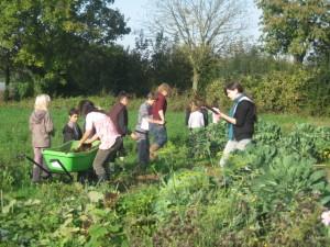 Jardinage avec Wilma : Au travail