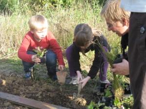 Jardinage avec Wilma : Planter les salades