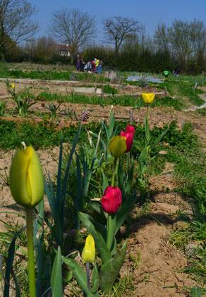 Les-jardins-de-Wilma